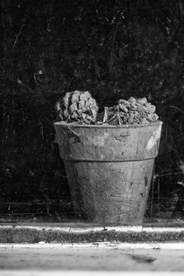 通过遗弃outbuildin肮脏的窗口被观看的老植物罐  免版税库存图片