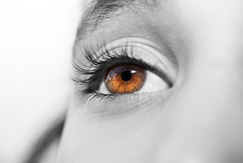 通透的神色眼睛 免版税库存图片