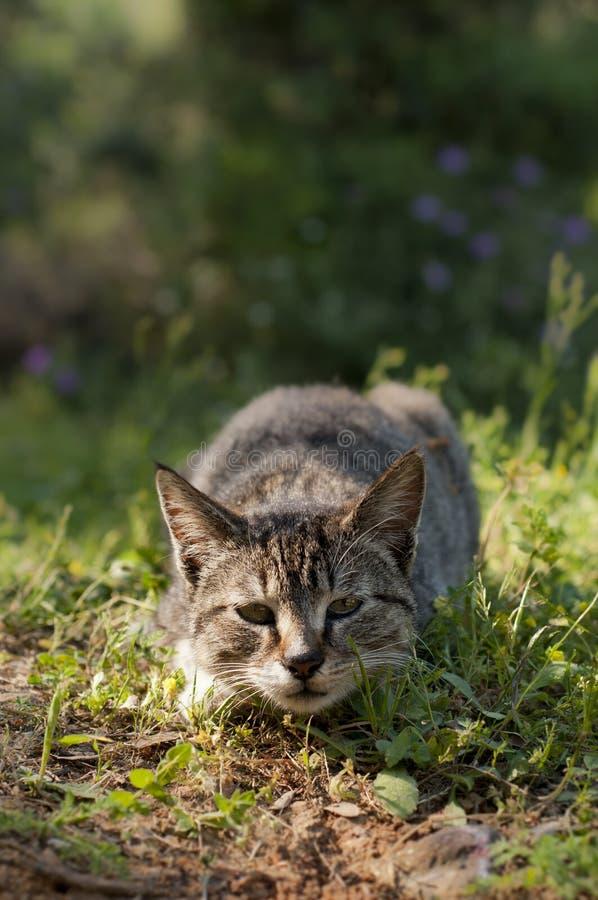 通配攻击的猫 免版税库存图片