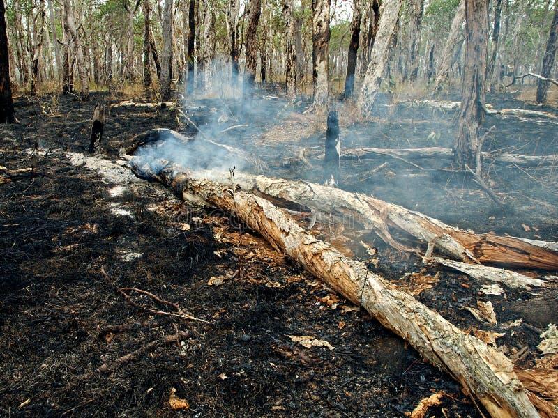 通配灌木的火 库存照片