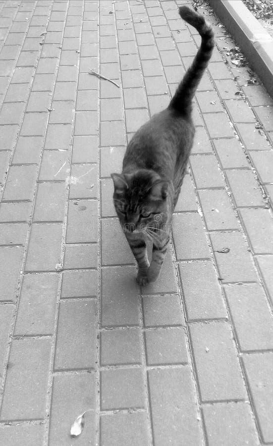 通配的猫 库存图片