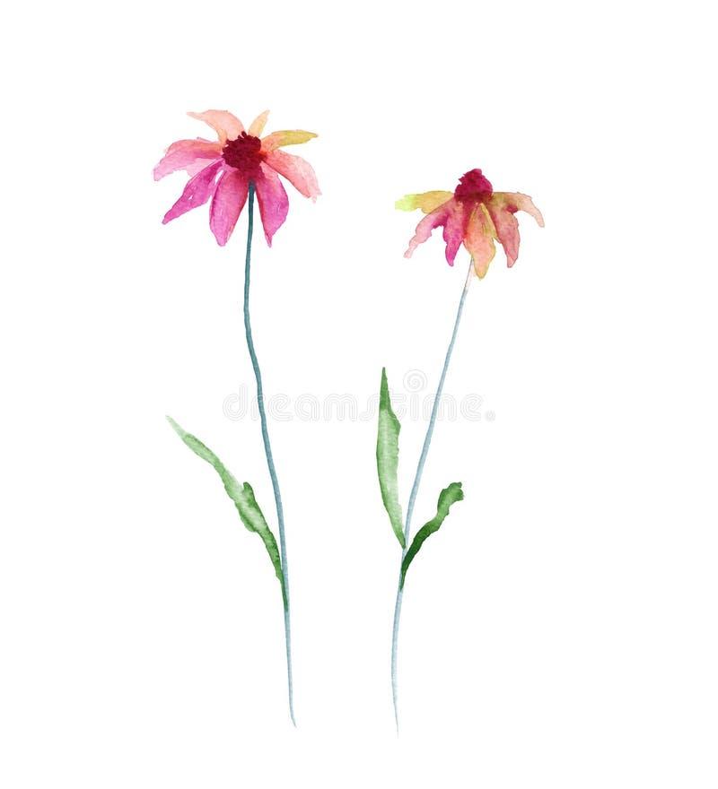通配的花 背景查出的白色 向量例证