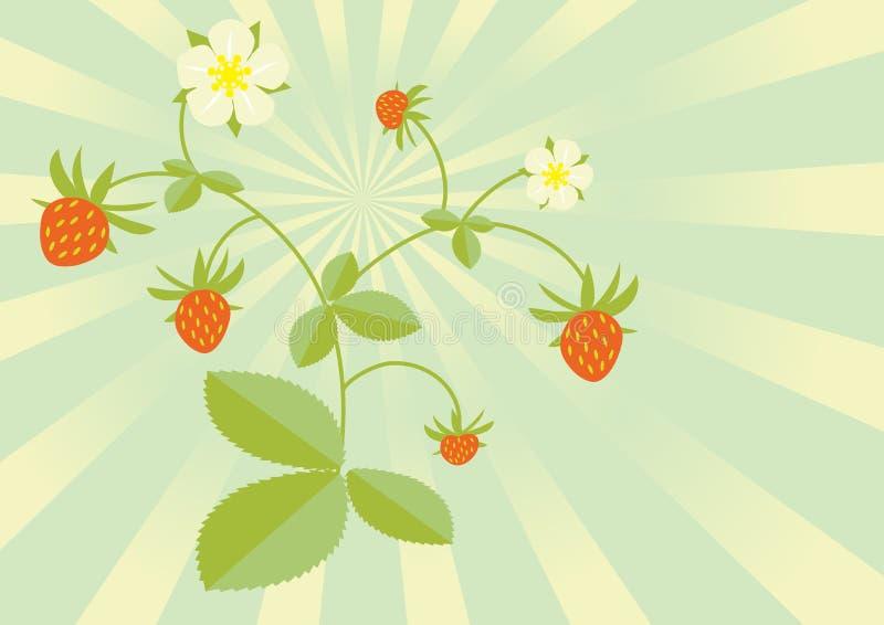 通配的草莓 库存图片