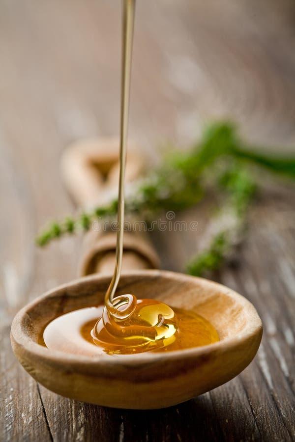 通配的蜂蜜 免版税库存照片