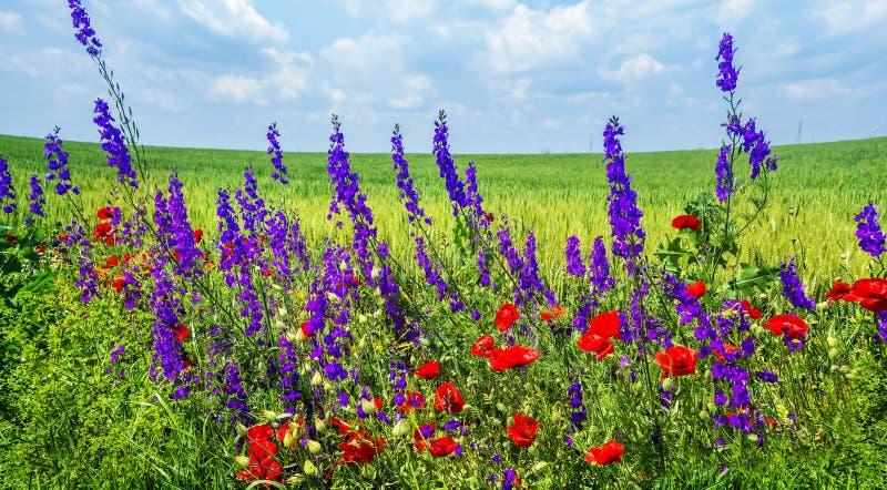 Download 通配美丽的花 库存照片. 图片 包括有 开花, 华丽, 本质, 植物群, 工厂, 室外, 云彩, 画布, 庭院 - 72364926