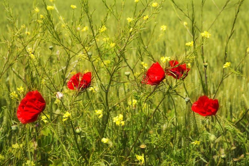 Download 通配美丽的花 库存图片. 图片 包括有 照亮, 五颜六色, 自然, 本质, 早晨, 开花的, 叶子, beautifuler - 72365933