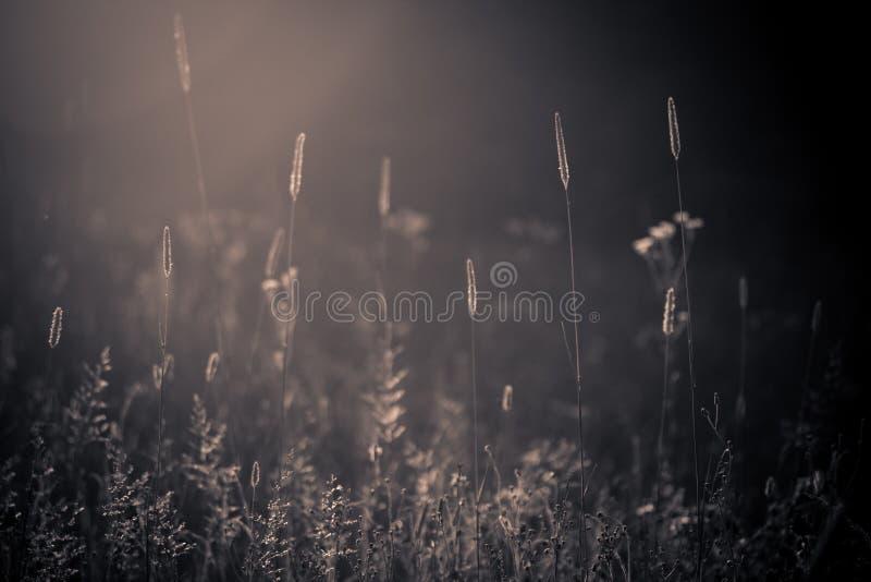 通配草甸的夏天 免版税库存照片