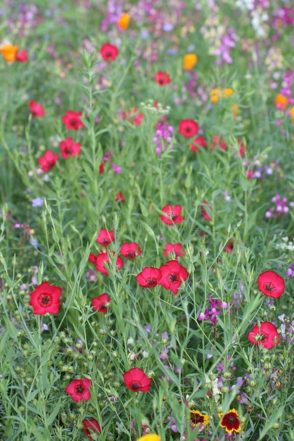 通配2朵花的草甸 免版税库存照片