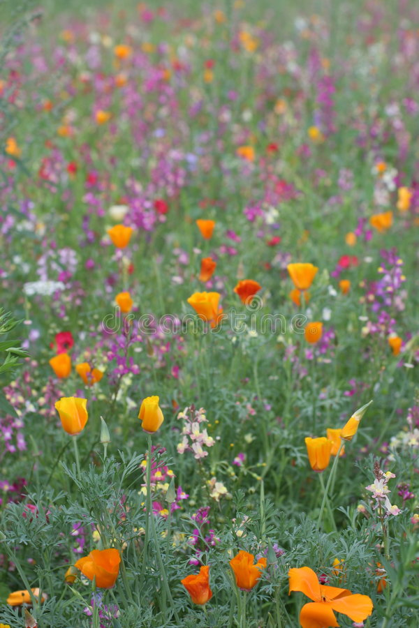 通配3朵花的草甸 免版税库存图片