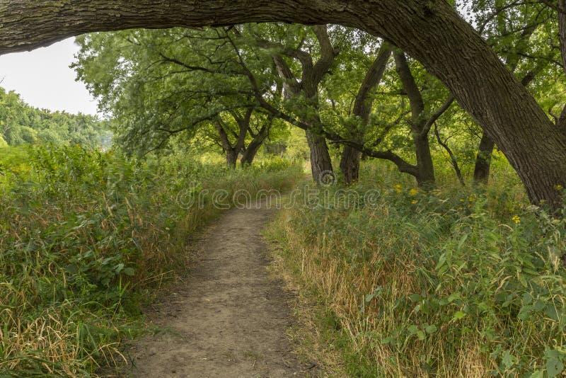 通风足迹在森林 库存照片