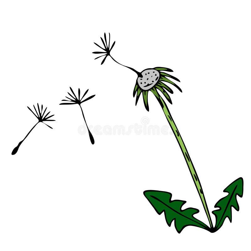 速写与花卉样式的向量图形设计的 花蒲公英自然设计 向量例证