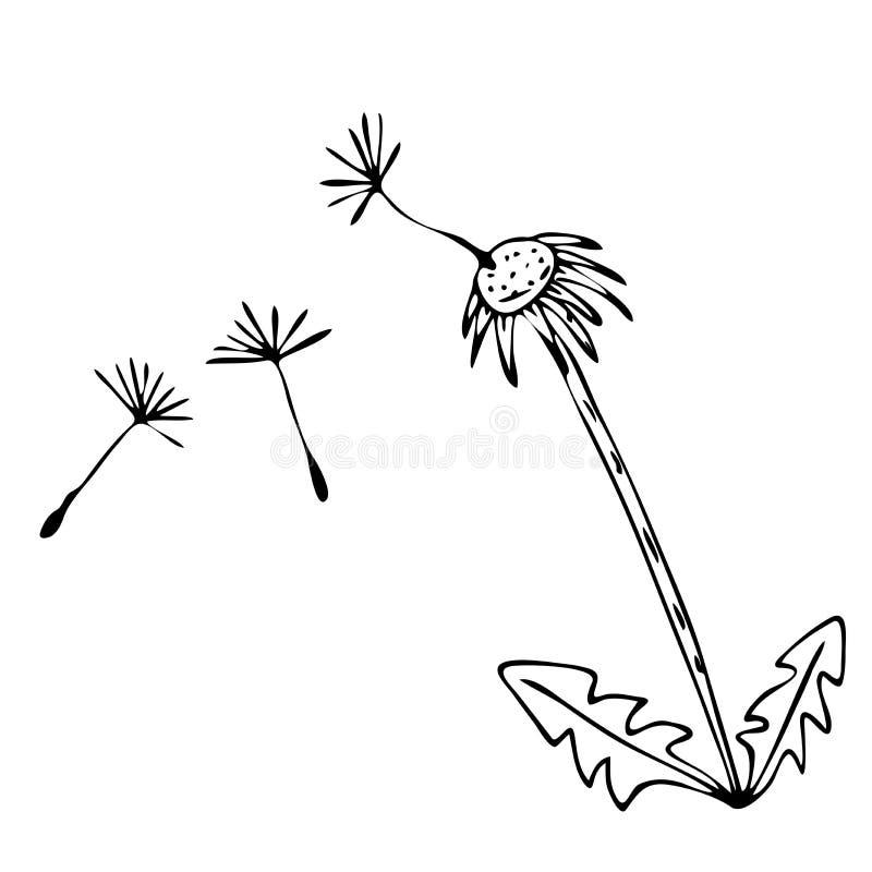 速写与花卉样式的向量图形设计的 花蒲公英自然设计 皇族释放例证