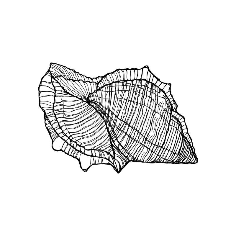 速写手画壳黑色概述在白色背景 库存例证