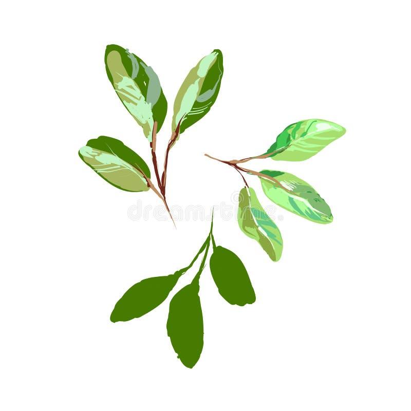 速写被隔绝的样式现实绿色年轻叶子在白色传染媒介例证 皇族释放例证