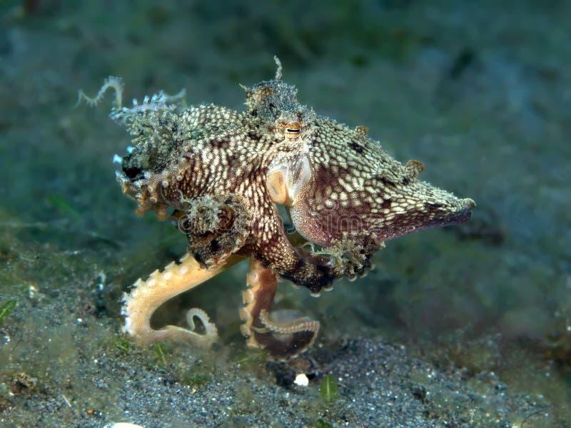 仿造章鱼 库存照片