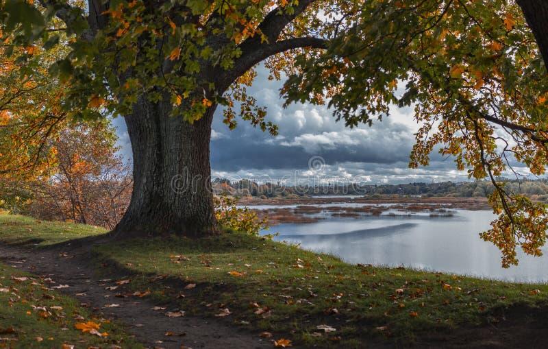 道加瓦河的海岸 免版税库存图片