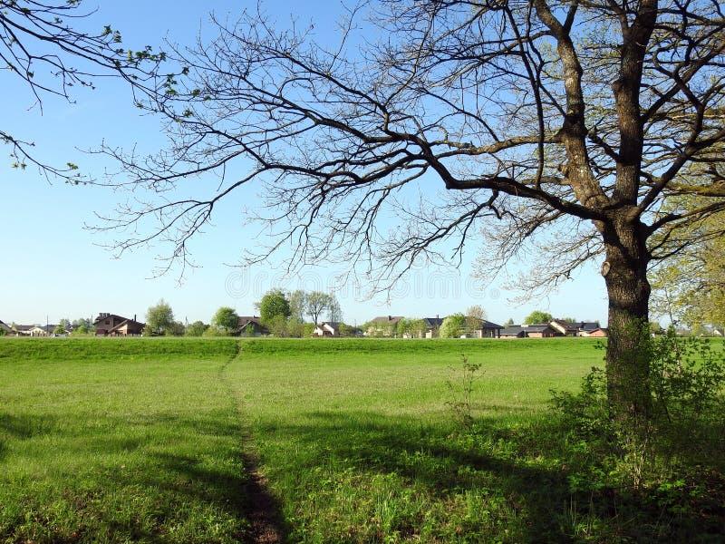 道路、家和美丽的春天树,立陶宛 库存图片