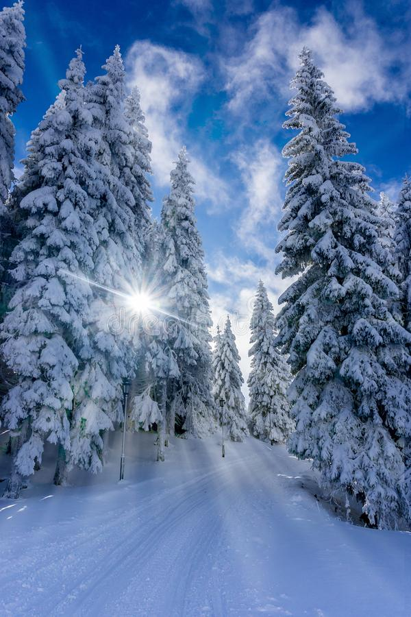 道路低谷山森林在一个晴朗的冬日 免版税库存图片