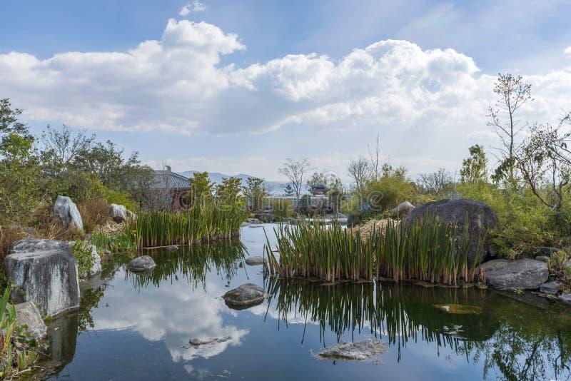 道路低谷沿一条溪的香蒲森林在丽江,云南,中国 库存图片