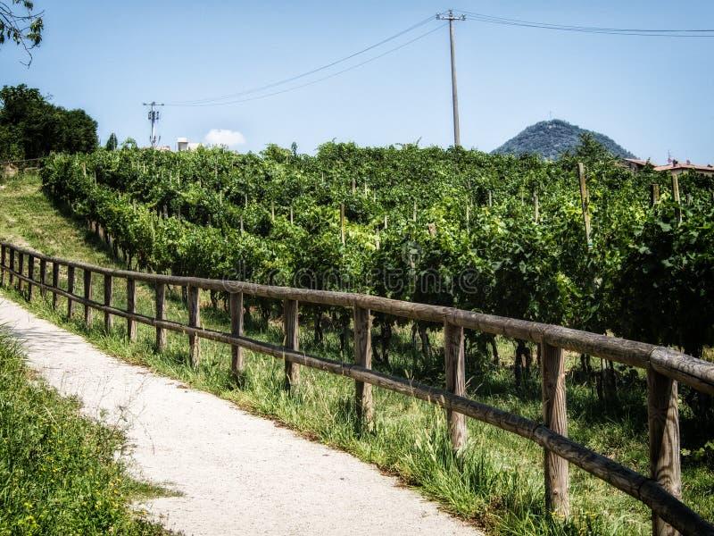 道路低谷葡萄园 免版税库存图片