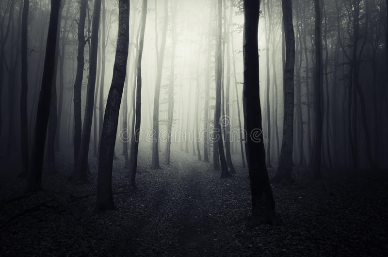 道路在一个黑暗的神奇森林里在万圣夜 库存照片