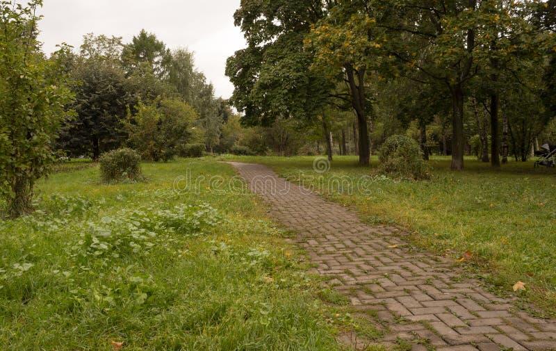 道路在公园,早期的秋天 库存图片