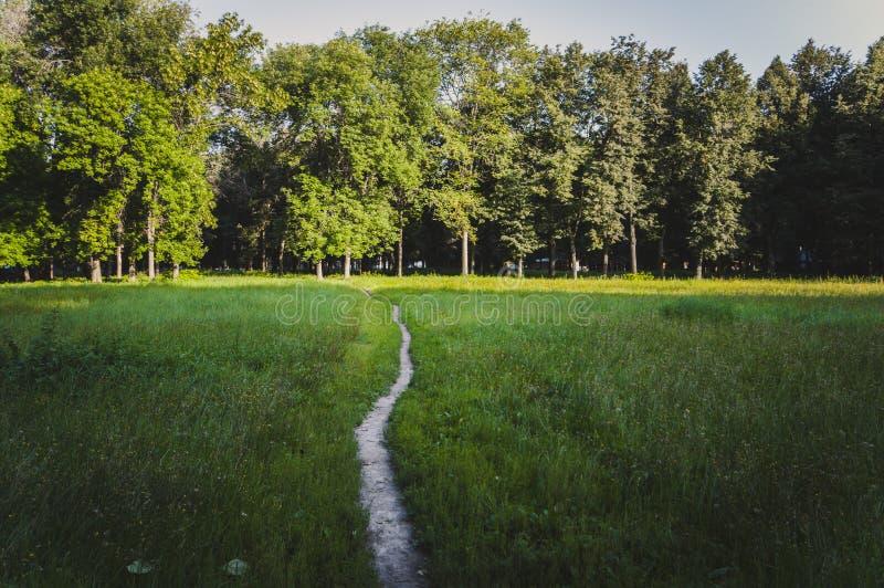 道路在公园 库存图片