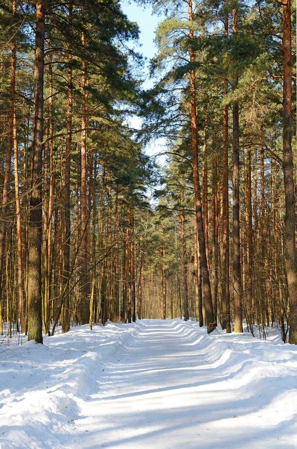冬天公园在一个晴天 免版税库存照片