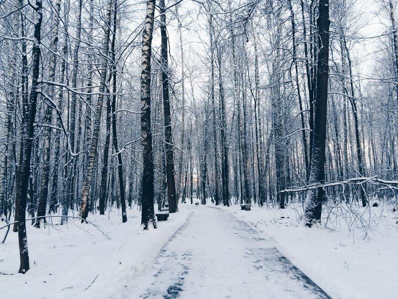 道路在多雪的森林里 免版税库存图片
