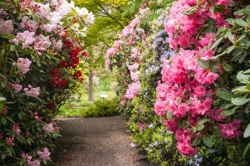 道路在庭院里 免版税库存图片