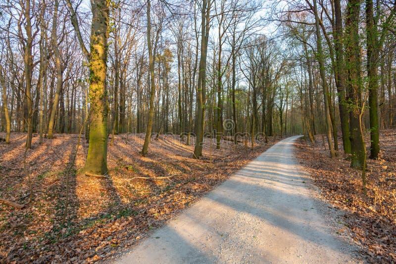 道路在日落的一个干燥森林里 免版税库存图片
