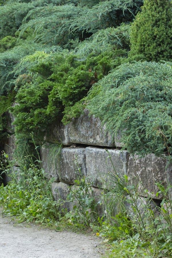道路在有石篱芭和常青树的美丽的装饰的庭院,风景设计公园和庭院里 库存照片