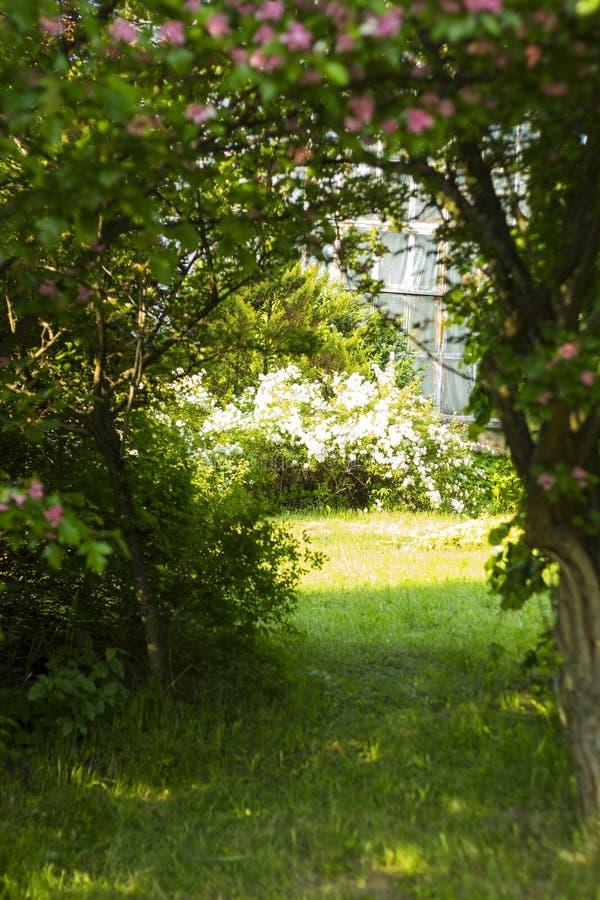 道路在树中的森林里 对神秘园的门 库存照片