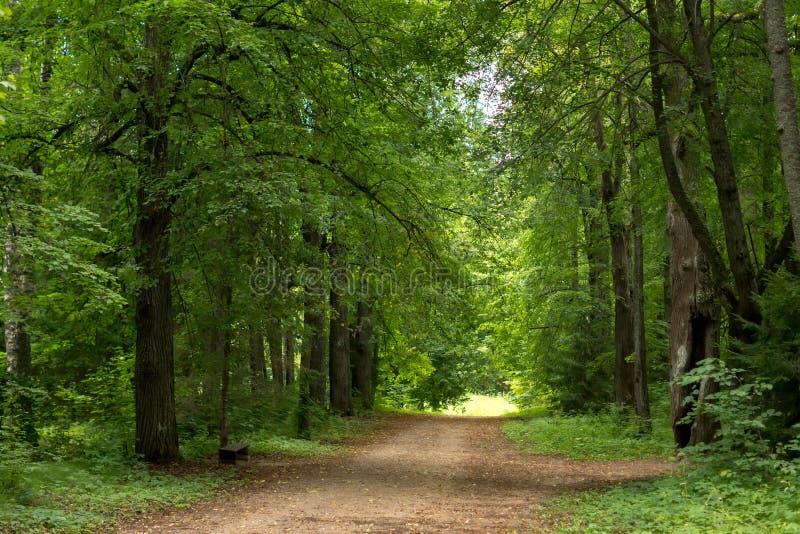道路在森林在夏天 免版税库存照片