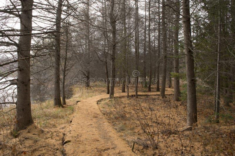 道路在森林里,晚秋天 免版税库存图片