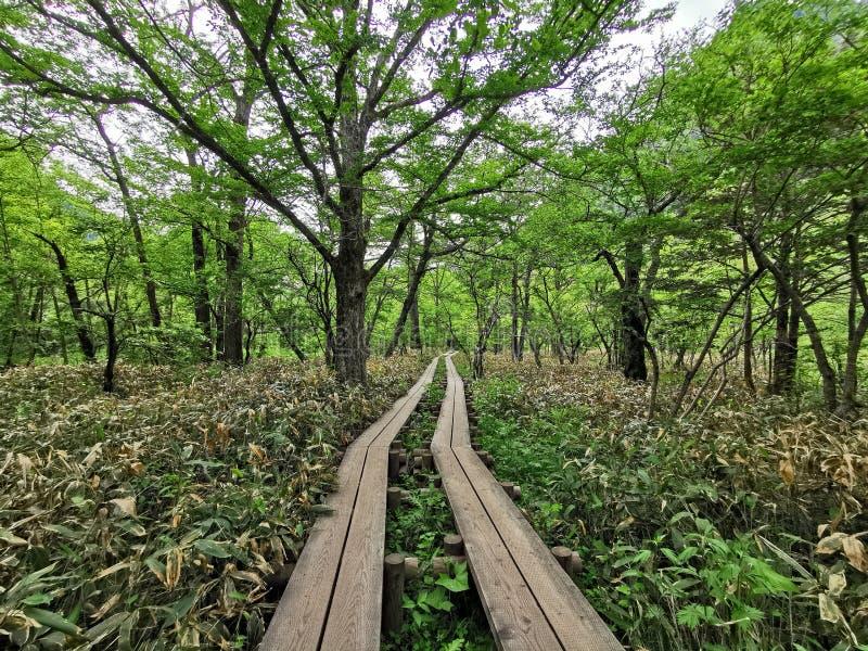 道路在森林里 免版税图库摄影