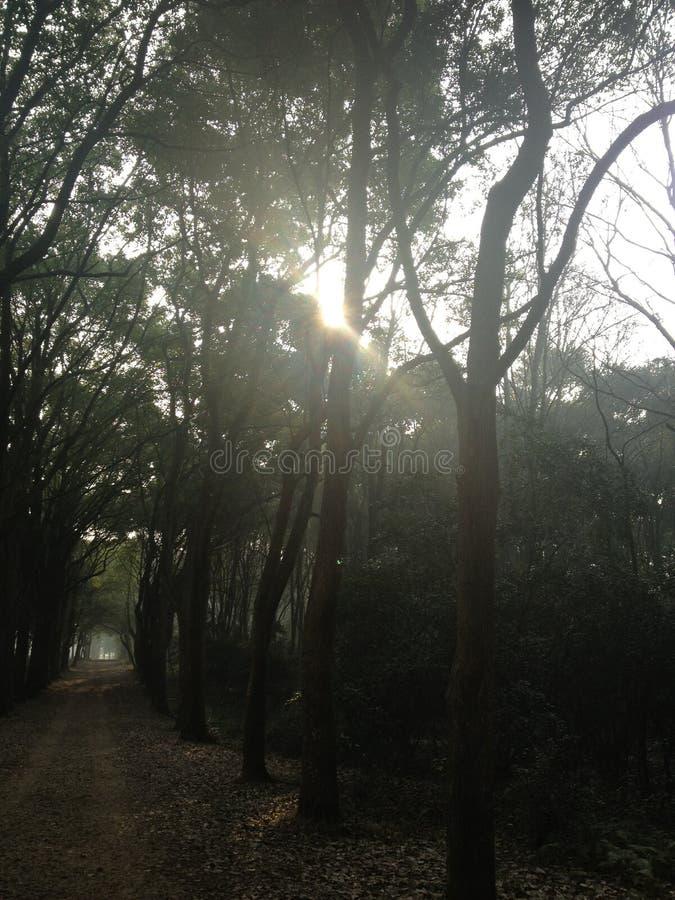 道路在森林里 库存照片