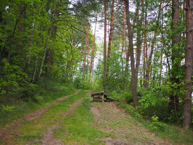 道路在森林,好日子里 库存图片