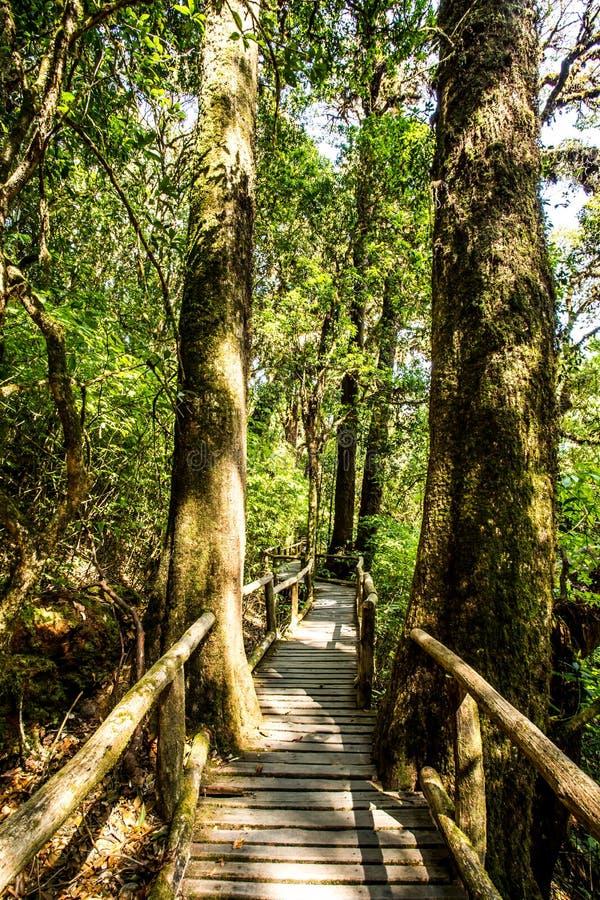 道路在森林, doi inthanon, chiangmai泰国 图库摄影
