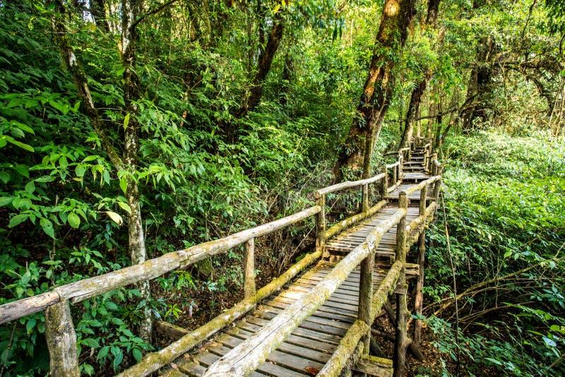 道路在森林, doi inthanon, chiangmai泰国 免版税库存图片