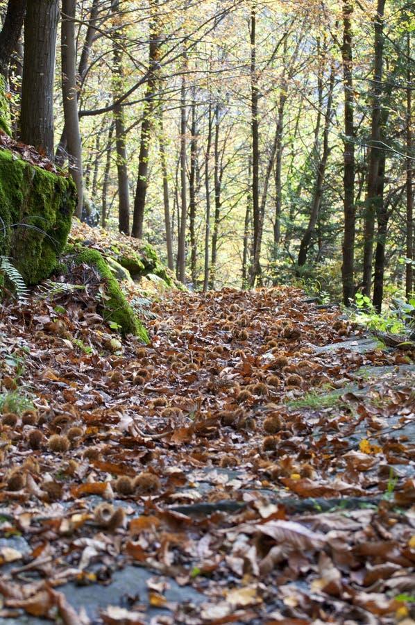 道路在秋天森林里 库存照片