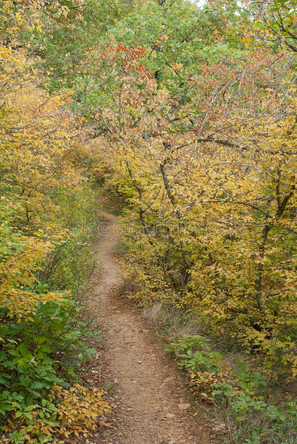 道路在秋季的山森林里在克里米亚半岛半岛 免版税库存图片