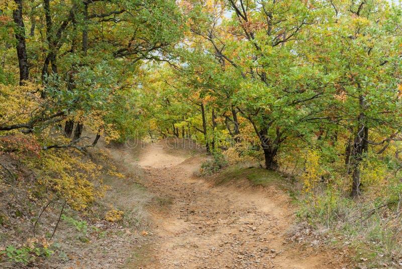 道路在秋季的山森林,克里米亚半岛半岛里 库存照片