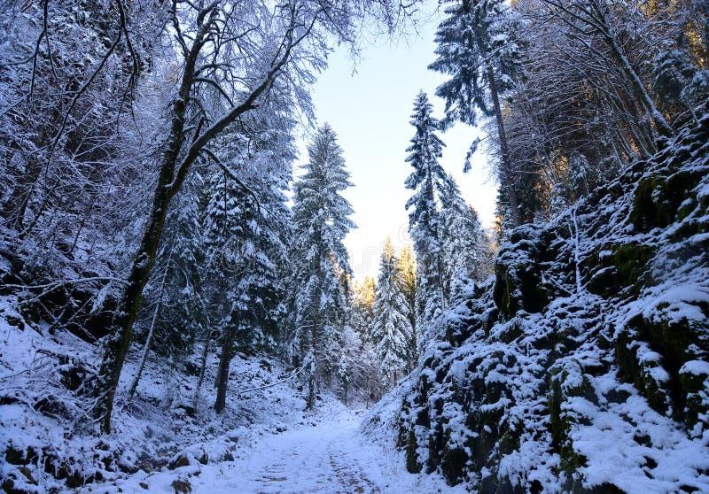道路在积雪的森林里有在背景中美好的日落 免版税库存图片