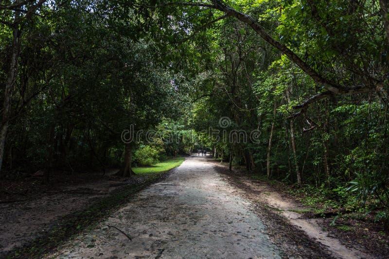道路在蒂卡尔公园 观光的对象在有玛雅寺庙和仪式废墟的危地马拉 库存照片