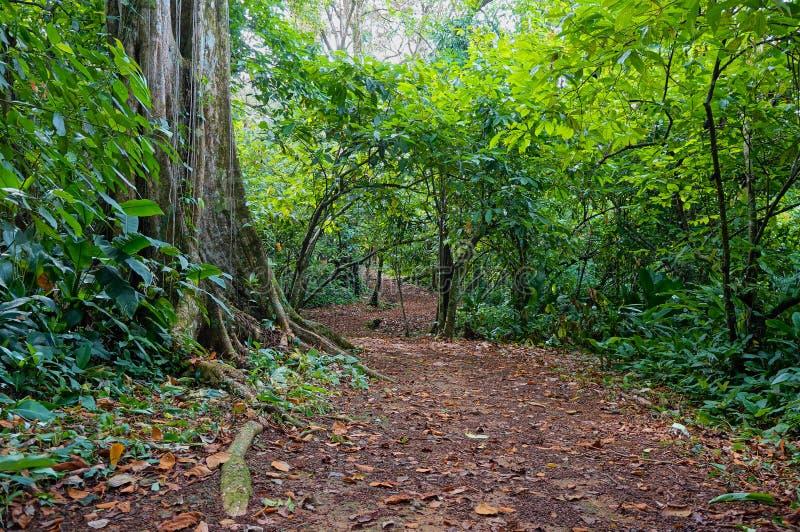 道路在巴拿马的密林 免版税库存图片