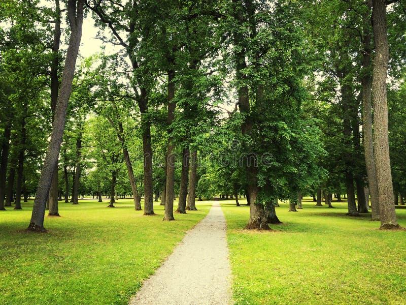 道路在绿色夏天公园 免版税库存图片