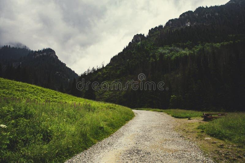 道路在Koscieliska,塔特拉山脉,波兰谷的雨中  免版税库存照片