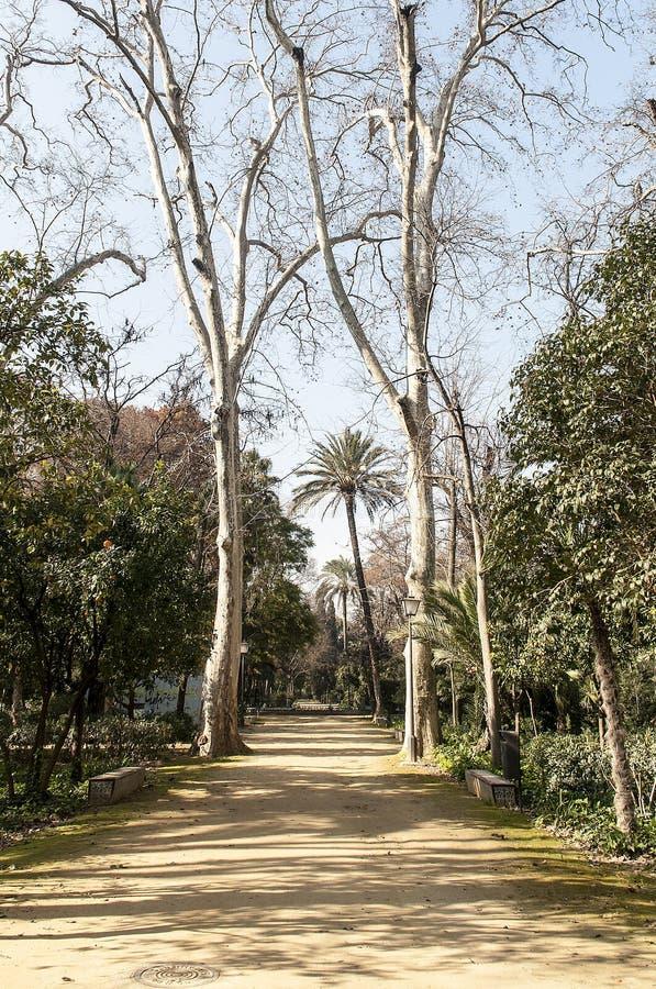 道路在MariaLuisa公园 免版税库存照片