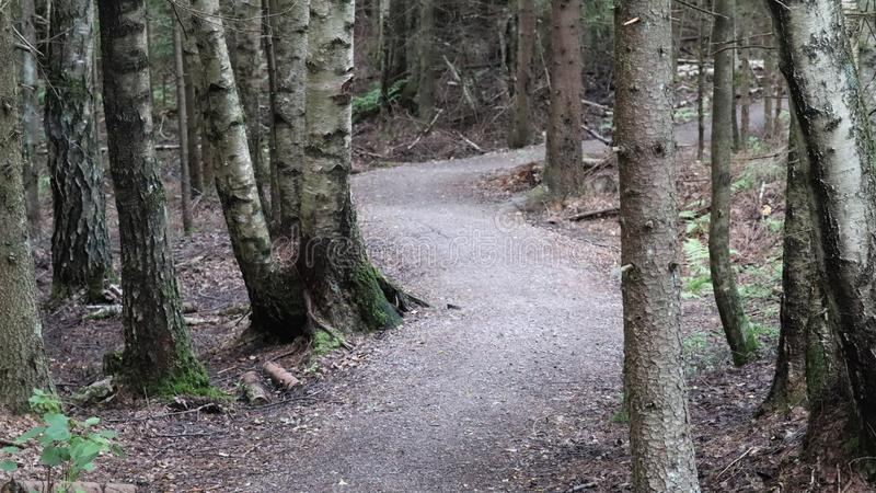 道路导致一个微暗森林 图库摄影